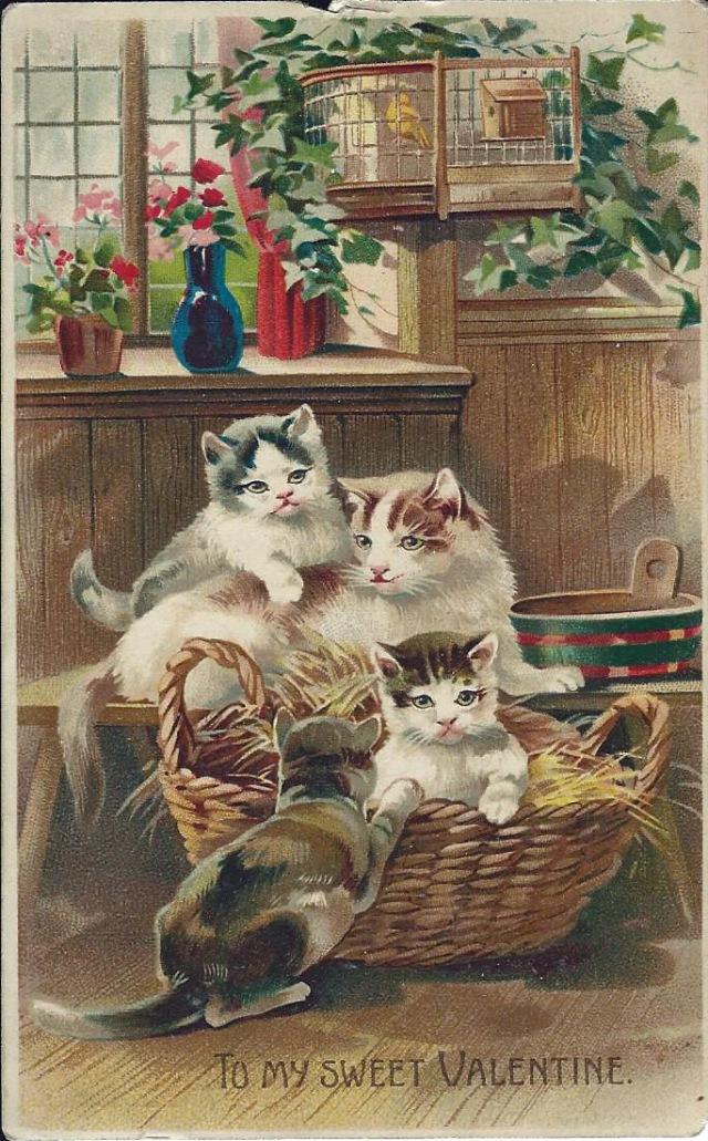 Cats1909