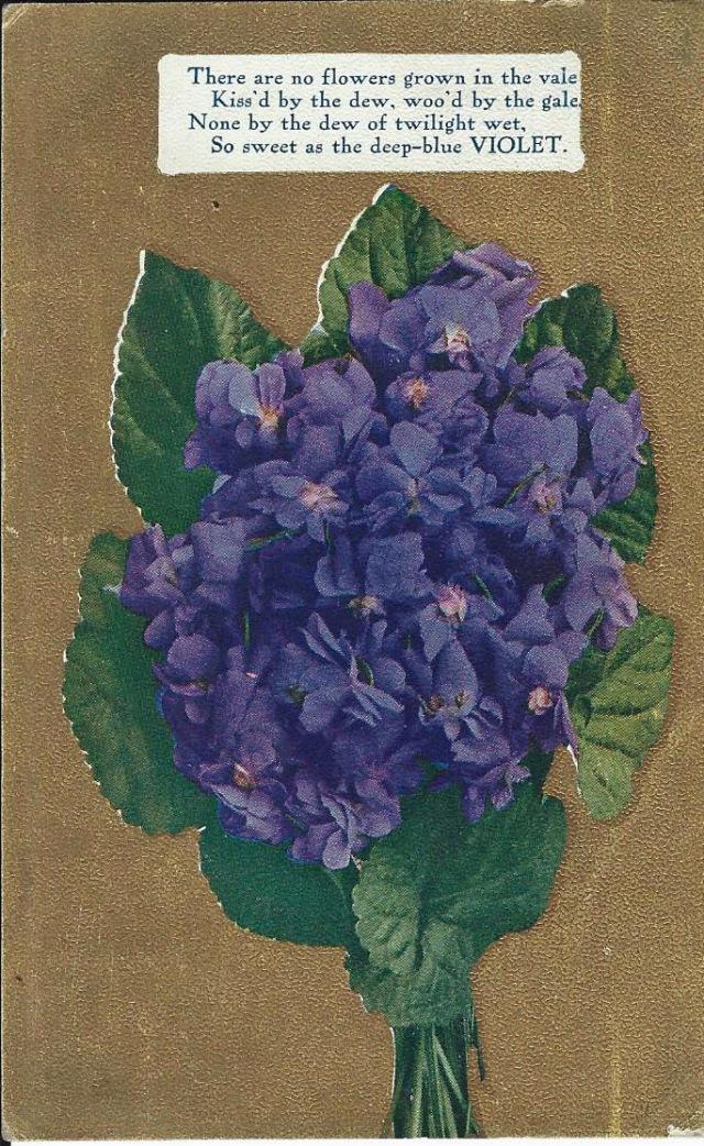 Violet1910