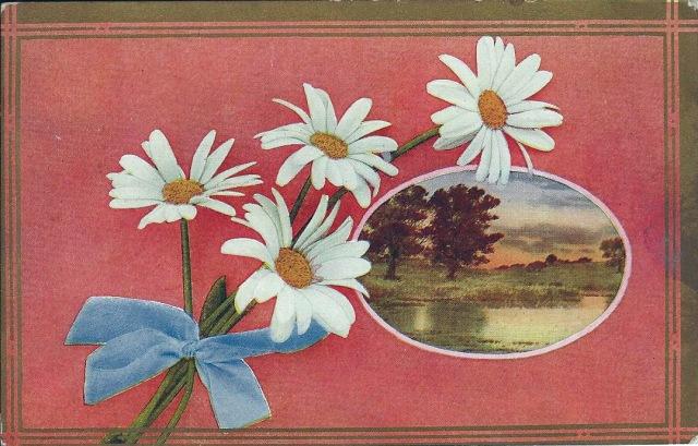 Daisies1910