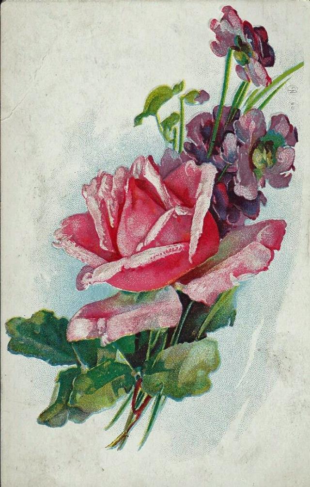 Rose1910