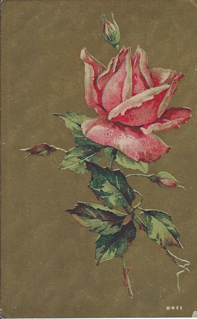 RoseGoldBack1910