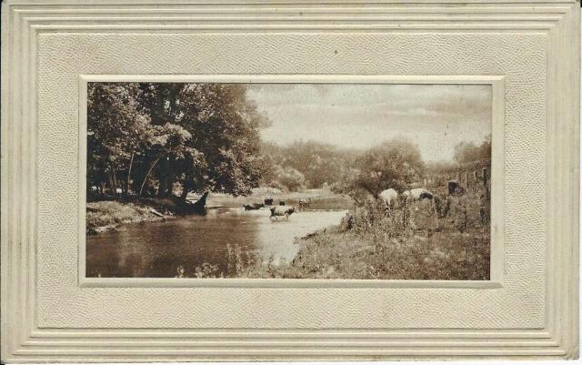 CowsInStream1912